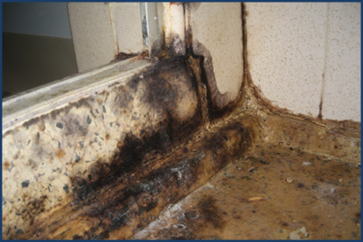 commercial mold removal wisconsin