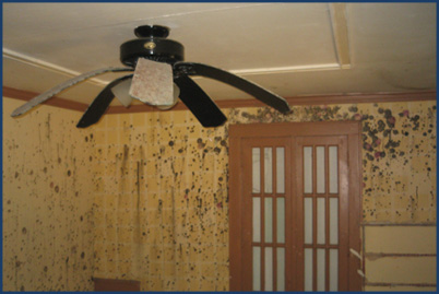 residential mold removal wisconsin