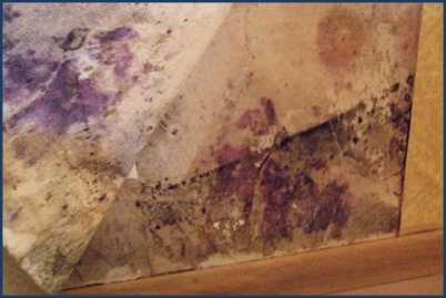Mold Removal From Wall Paper